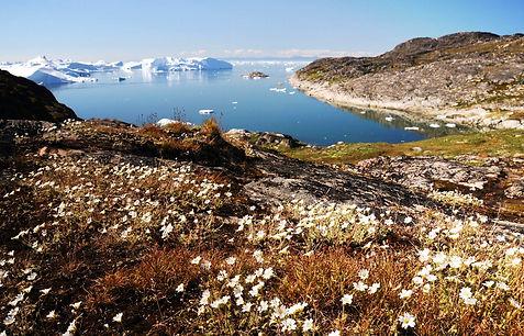 арктика летом.jpg