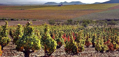 Виноградники Риохи (4).jpg