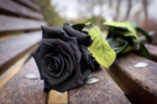черная роза2.jpg