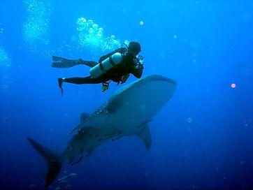 бали подводное плавание.jpg