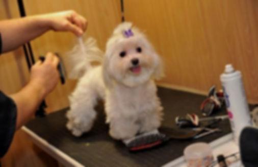 Груминг шерсть собак.jpg