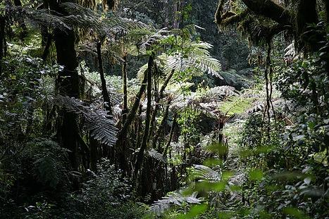 переменно- влажные леса.jpg