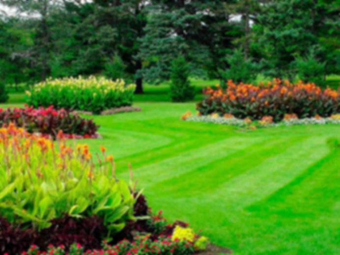 цветущий газон, газонная трава