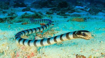 морские змеи.jpg