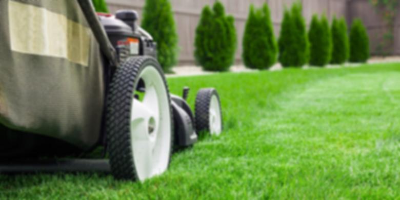 виды газонов, трава для газона