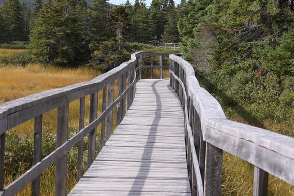 Walking Trail, Springdale