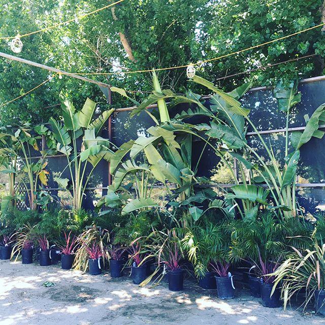 Tropical Insperation