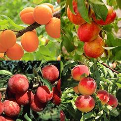 FruitSaladTree-TreeSquares.jpg