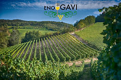 Gavi Wine Land