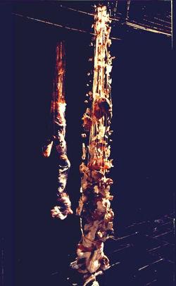 Hanging or Standin. Part of Instillation. One part.jpg