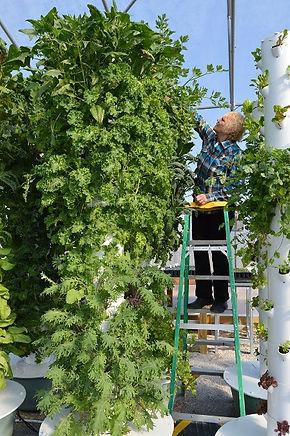 vertical farming towers 450.jpg