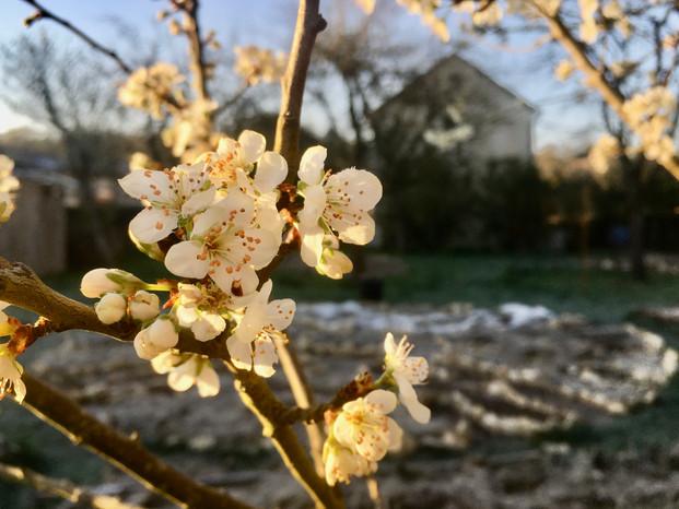 L'hiver les fleurs résistent