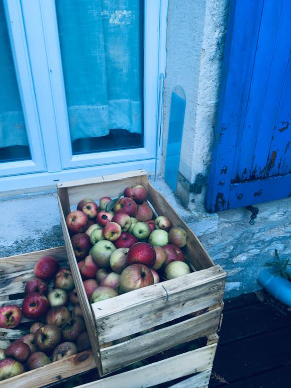 Les pommes divines du Moulin