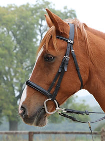 Horse at Lindrick Livery