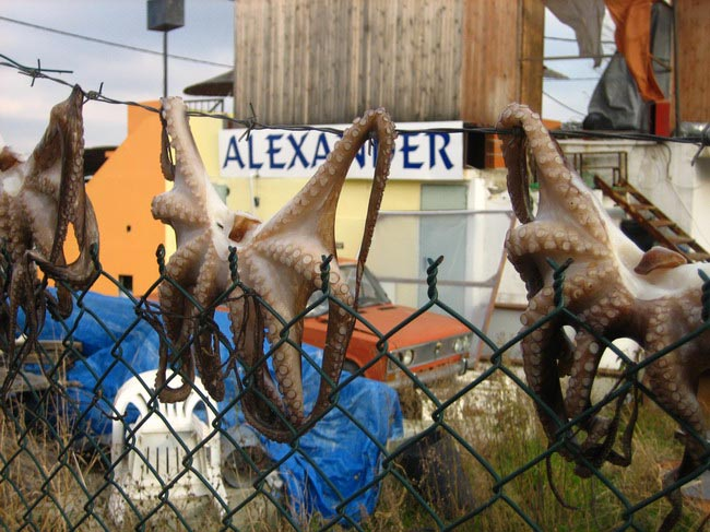 The Drying of the Octopus!-web