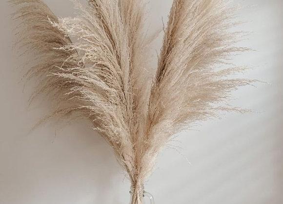 Natural Colour Pampas Grass