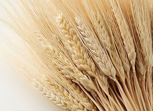 Natural Dried Wheat
