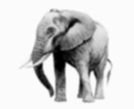elephant-basic.png