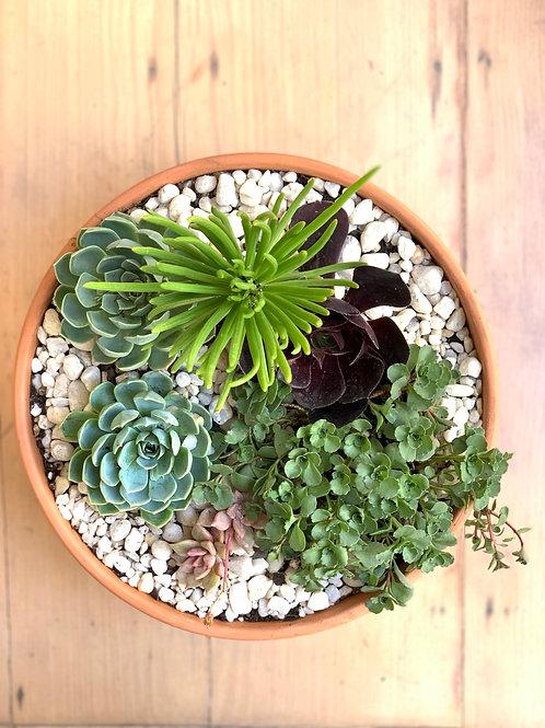 Succulent Medley