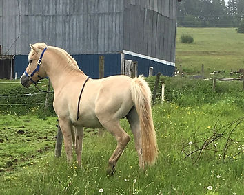stallion spirit_edited.jpg