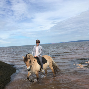 fjord horse in the sea.jpg