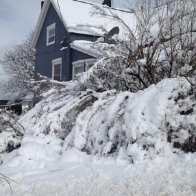 winter bushes.jpg