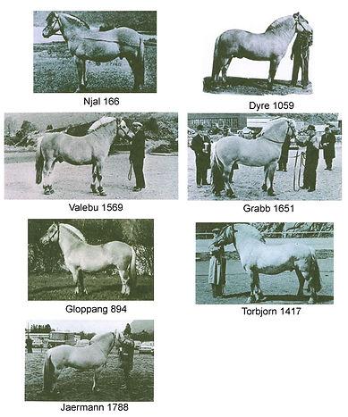 Historic Stallions