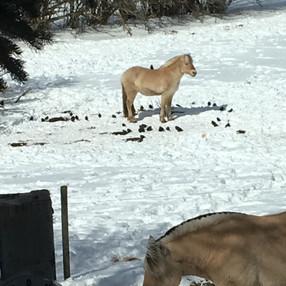 foal in winter.jpg