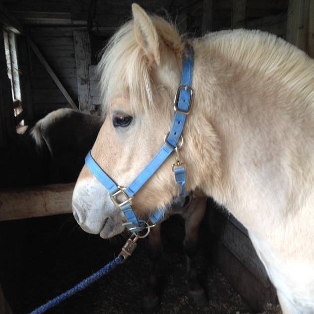 Herd Stallion Spirity as a foal!