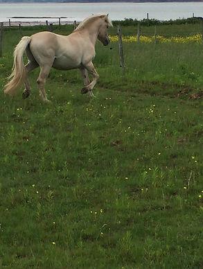 New herd Stallion Spirit