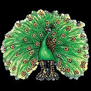peacockweb.png
