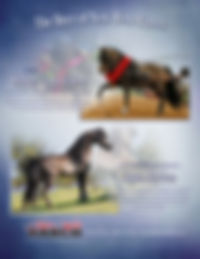 Lonnie Perdue Stallion Ad FINAL.jpg