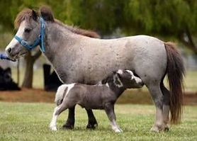 Mare-and-foal-300x215.jpg