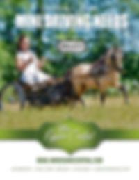 Mini-Equine-Central-Website-Ad-AMHA.jpg