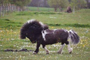 Foal-300x199.jpg