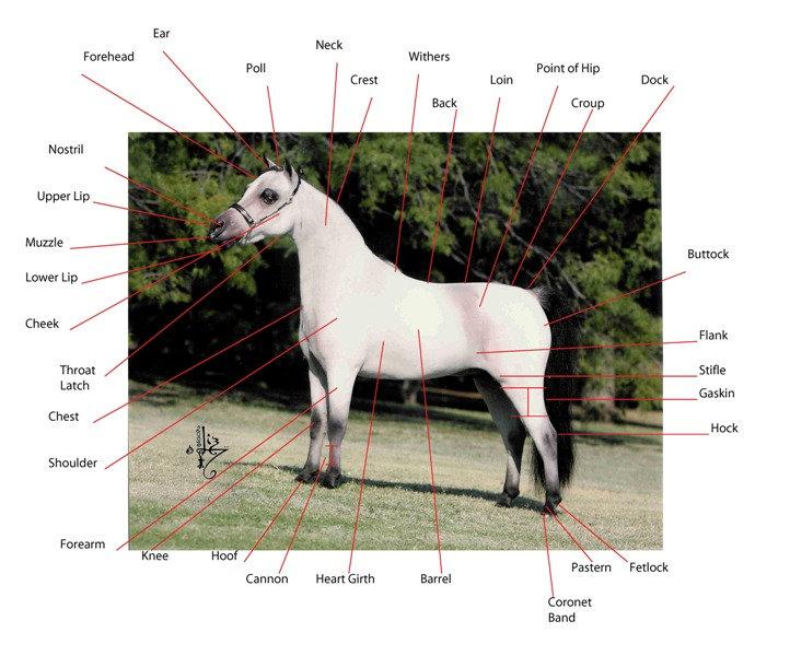 horseparts.jpg