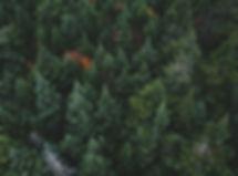 nature-communication.jpg