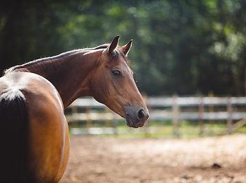 Horse stock.jpg