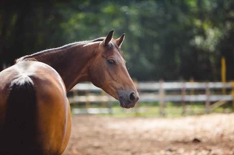 Equine Consultation
