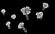 dandelion_PNG12881.png