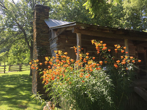 Turk's Cap lilies at the 250-year-old ca