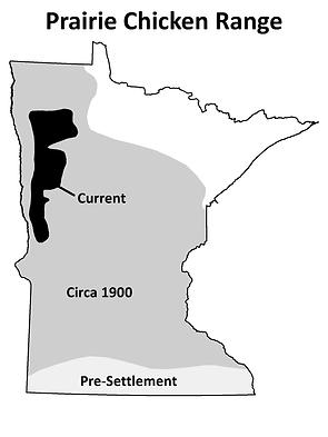 Greater Prairie Chicke Range in Minnesota