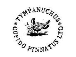 tympanuchus-cupido-pinnatus-ltd-72152634