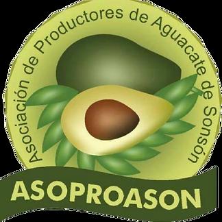 asoproa-removebg-preview.png