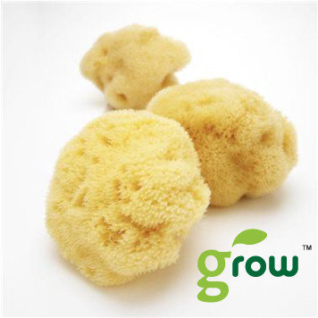 Organic Silk Sea Sponge-XL