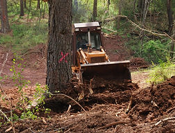 Removing a tree to build a road
