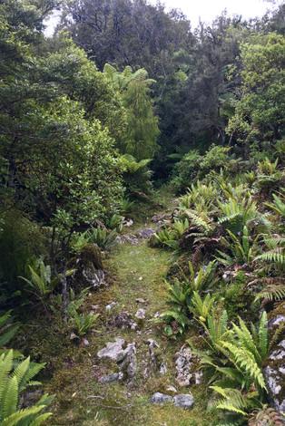 Demon Trail Hollyford Track