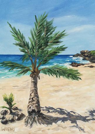 """Palm Trees"""