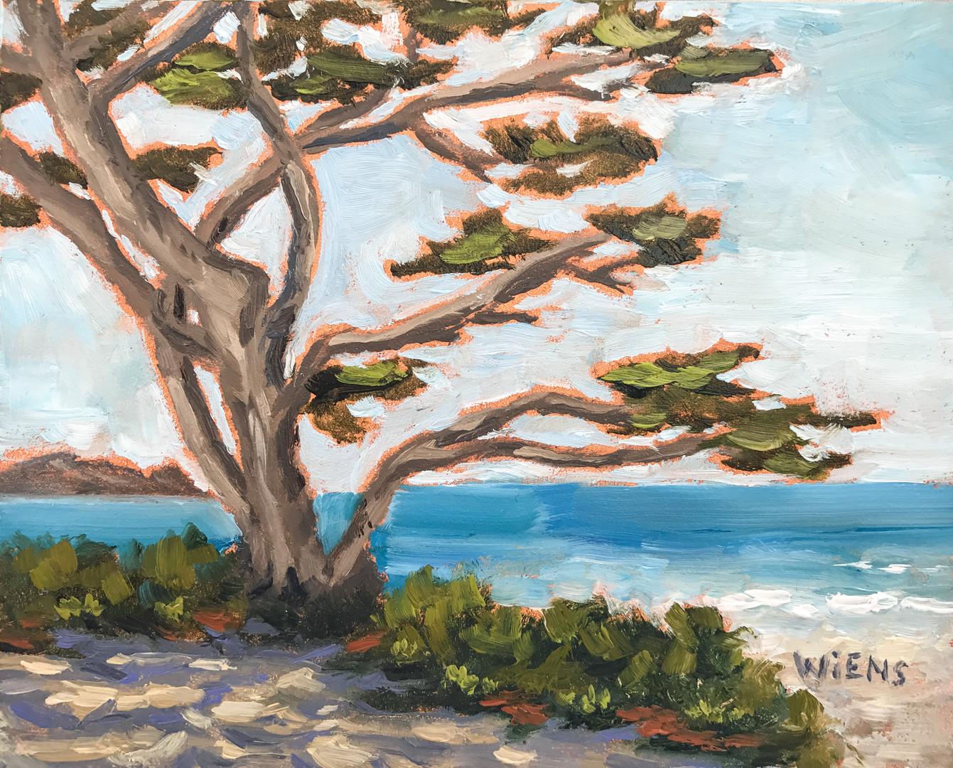 """Graceful Cypress"""