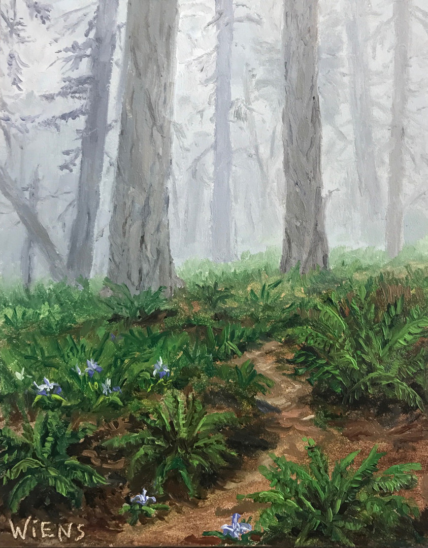 """Redwoods in Fog"""